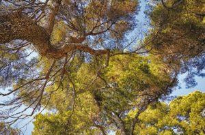Mehr Ökologie beim Bauen und Sanieren – aber wie?